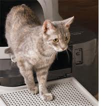 automatic litter box reviews